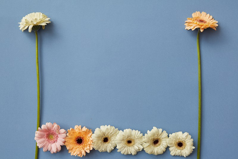 A pattern of white orange and pink gerberas on a blue paper background. Figures from the game Tetris. Minimal spring concept. Flat lay. photo