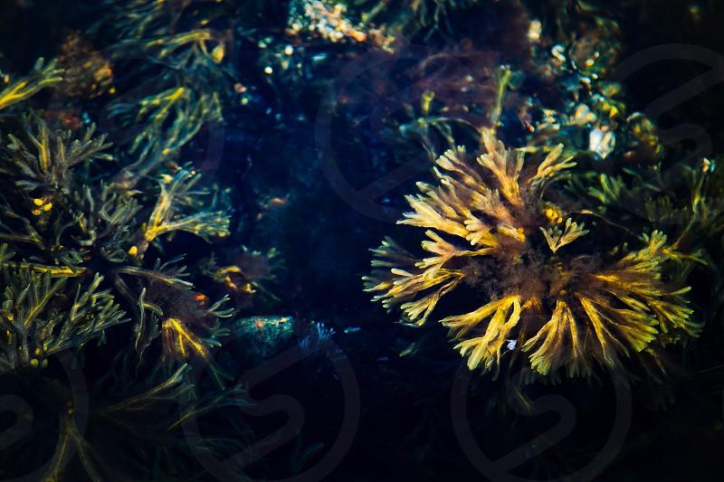 Below the surface water sea ocean plants transparency  photo