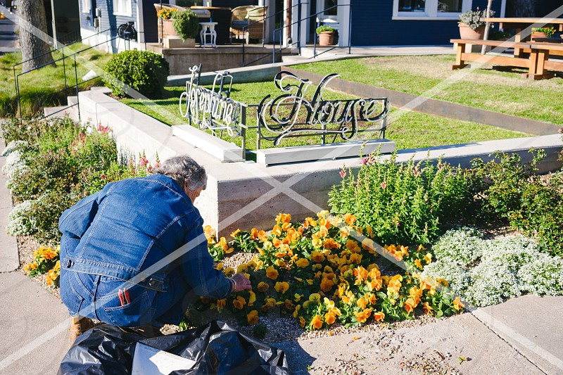 Well-known Clarksville restaurant Josephine House. Gardner tends to the flowers. photo
