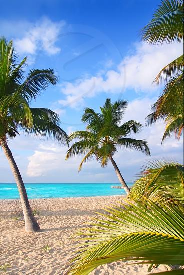 Caribbean North beach palm trees Isla Mujeres island Mexico Cancun photo