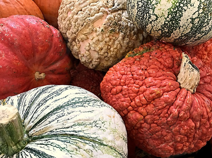 A collection of white orange and green smooth and bumpy pumpkins and gourds  photo