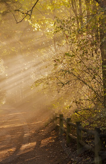 Light rays through park trees. photo