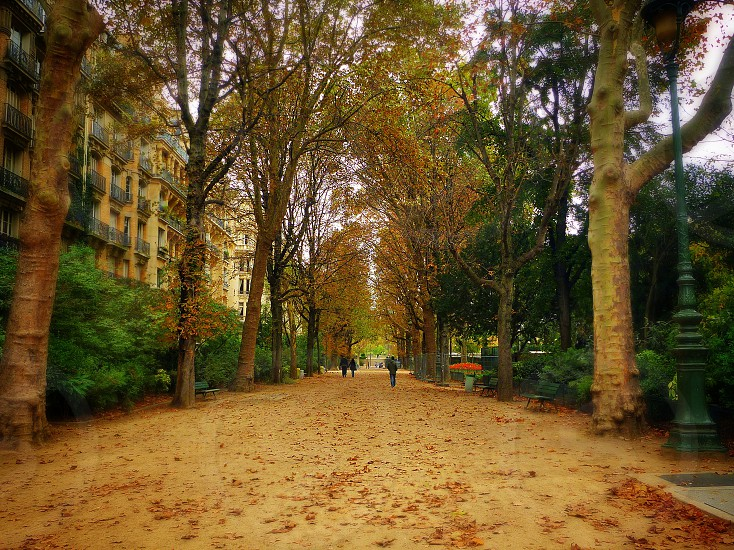 Walking in Paris photo
