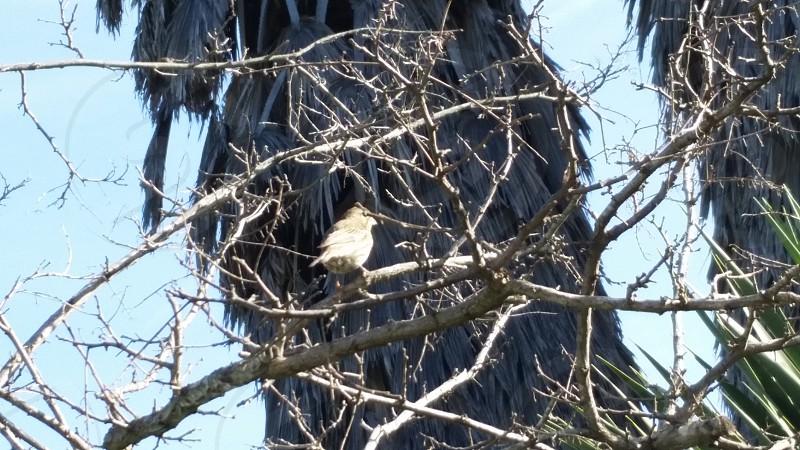 little bird in the tree photo