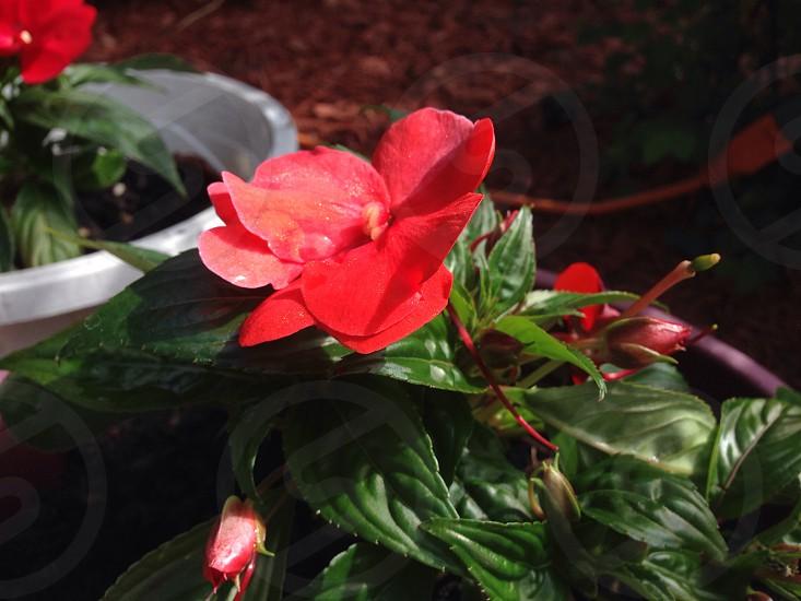Red Flower!  photo
