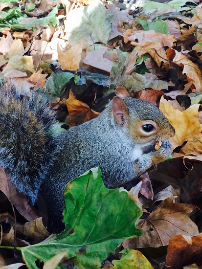 Friendly Squirrel  photo