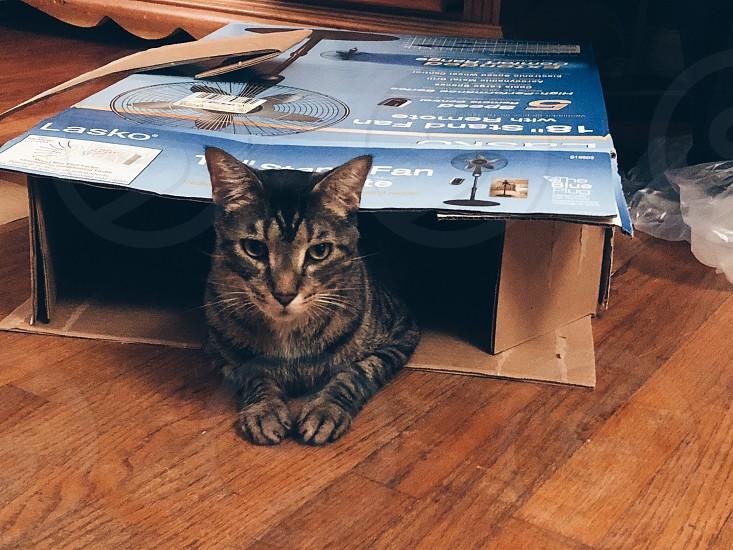 New boxcatcontentkittyfelinehappyboxexploringpetpets photo