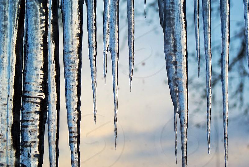Ice drops winter cold seasonal season nature drop  photo