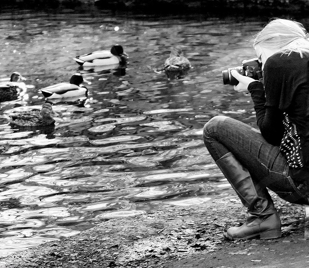 Black and white image of a female photograph shoot ducks in a pond. photo