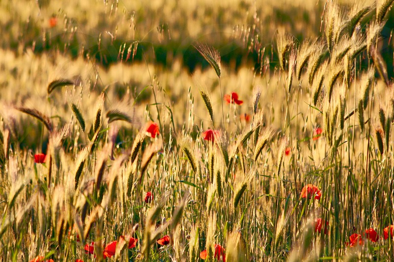 Field hale nature yellow peace atmosphere country photo