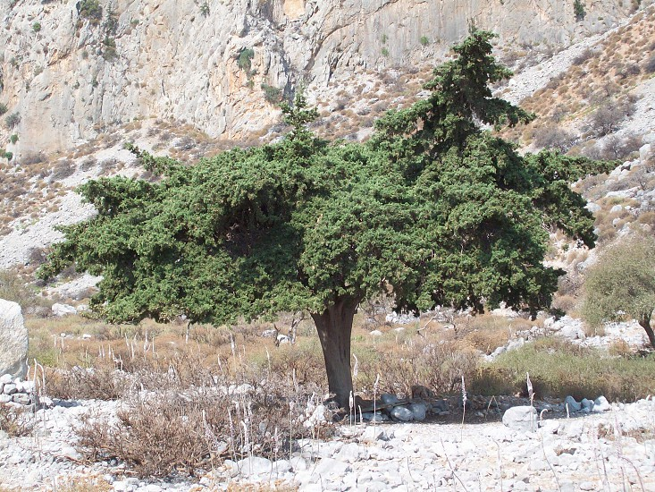 shade - incongruous - Greek - wilderness - barren - Life within wilderness - shadow - Greece -  photo