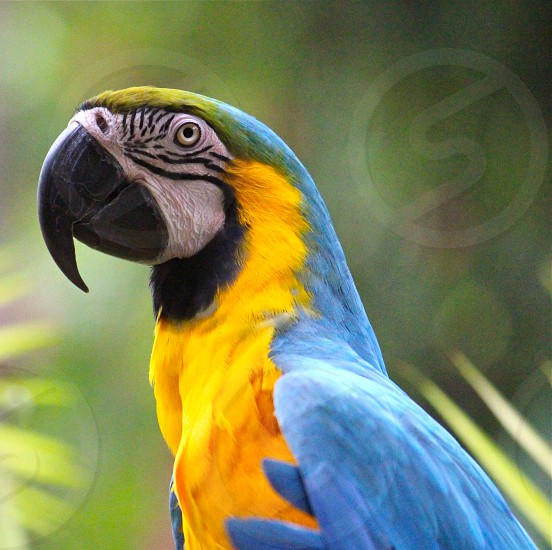 blue-and-yellow macaw in shallow photography photo