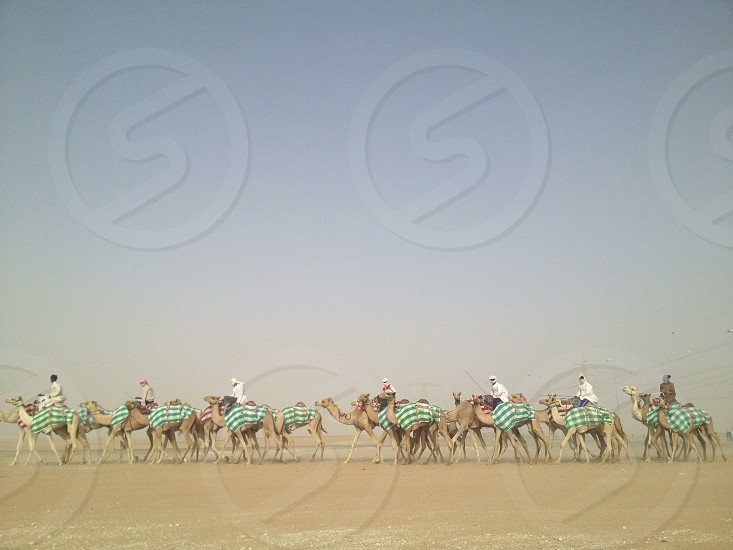 Out for training - Liwa Abu Dhabi United Arab Emirates photo