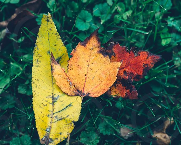 Simple. Vibrant. Fall foliage photo