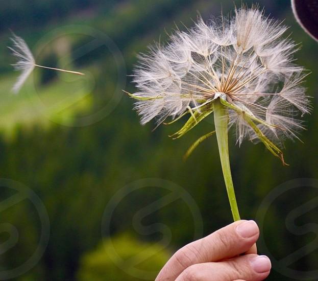 selective focus photography of dandelion photo