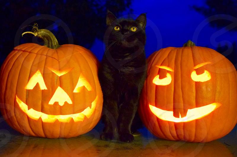 Scary Black Cat Between Halloween Night Jack O Lanterns By Kathy Bovee Photo Stock Snapwire
