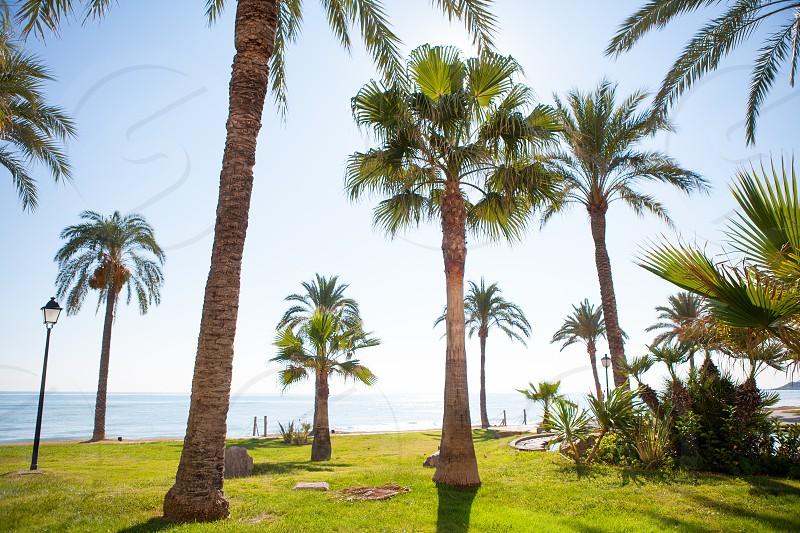 Oropesa de Mar in Castellon palm tree garden in mediterranean sea photo