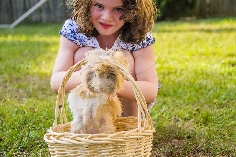 girl putting brown guinea pig in brown woven basket on green grass photo