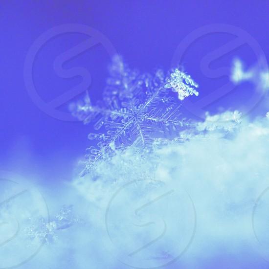 Snowdrift photo