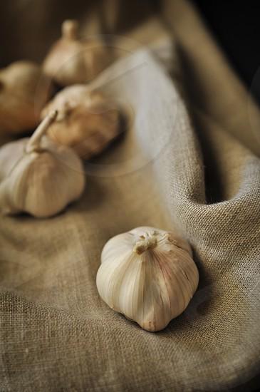 Garlic on a Linen Fabric photo