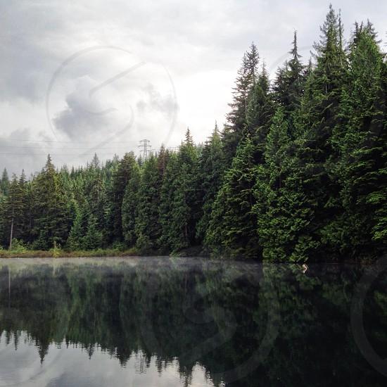 pine trees near waters photo