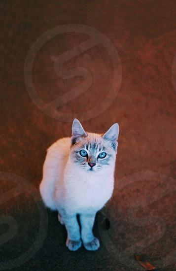 white cat sitting photo