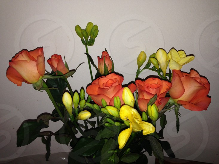 Flowers orange yellow roses photo