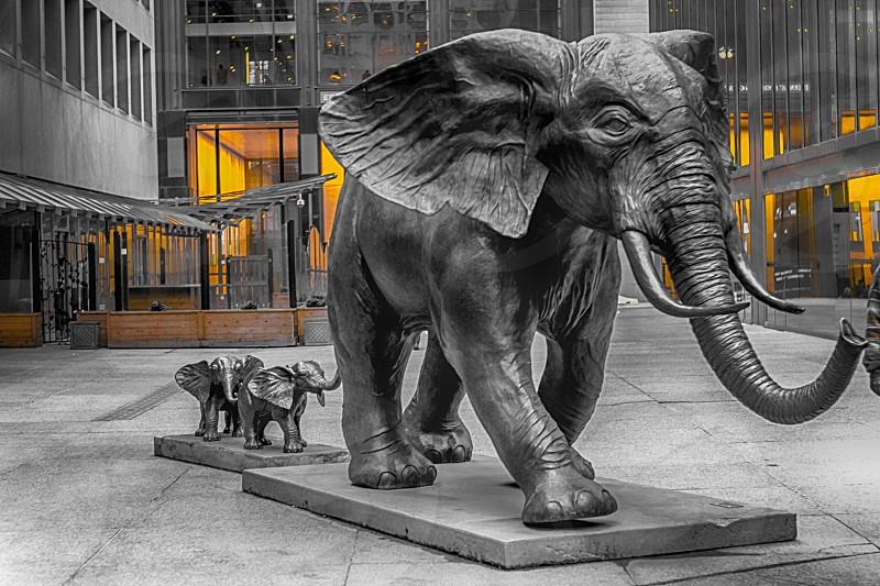 #elephants #family #familyelephants #urban #cityscape #babyelephants #elephantssculpture #elephantsstatues  #wildlife #animal #baby #elephantsinmiddleofcity #toronto #canada #lights #elepahantswalkingwithbabies #elephantswalk #together   photo