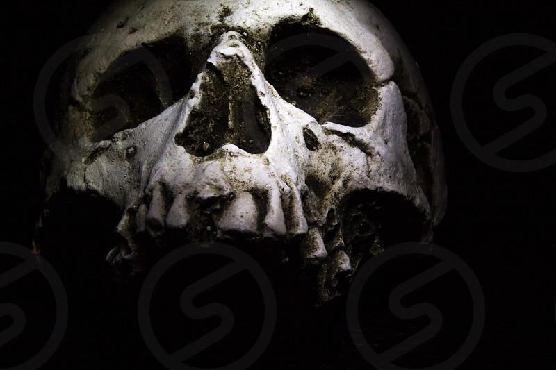 A human skull on a dark background. photo