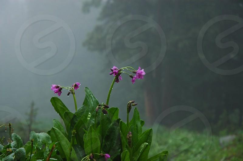 Purple flowers in fog photo