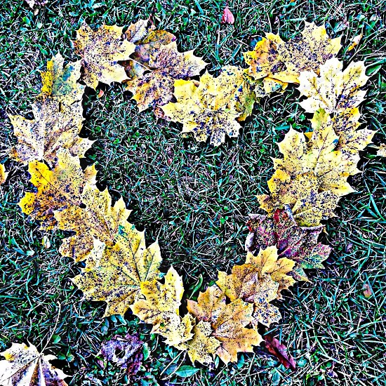 A fall color heart :) leaves photo