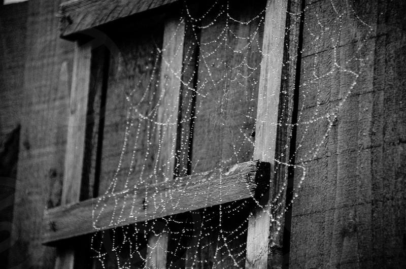 Spider's Web dew black and white photo