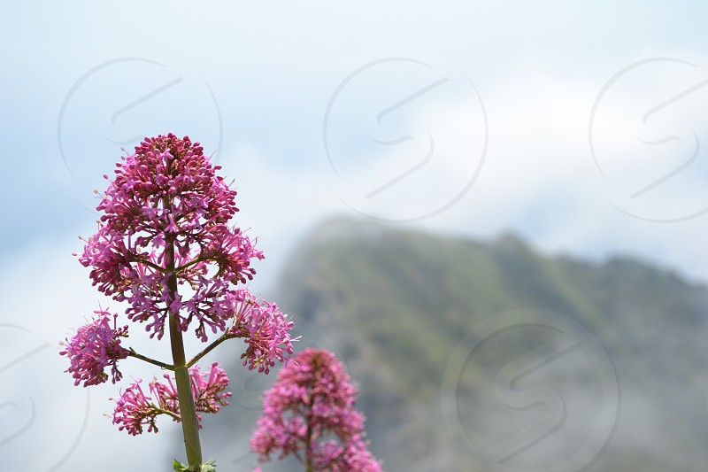 Flower on the Mountain photo