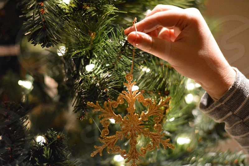 person holding gold flakes christmas decor photo
