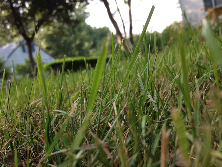 Green grass on a nice day photo
