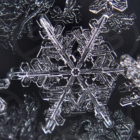 microscope view of snowflake photo