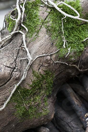 Mossy Log photo