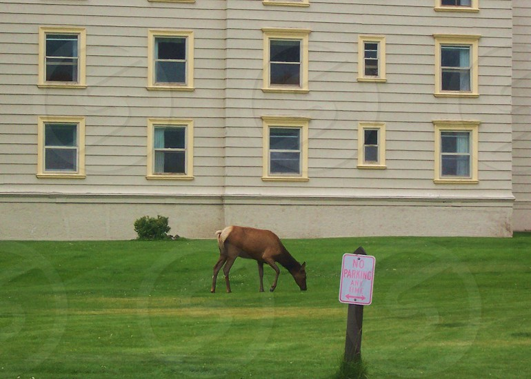 brown horse on grass photo