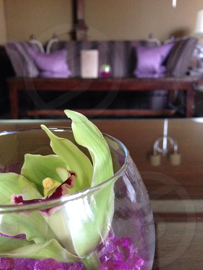 purple flower in wine glass ontable photo
