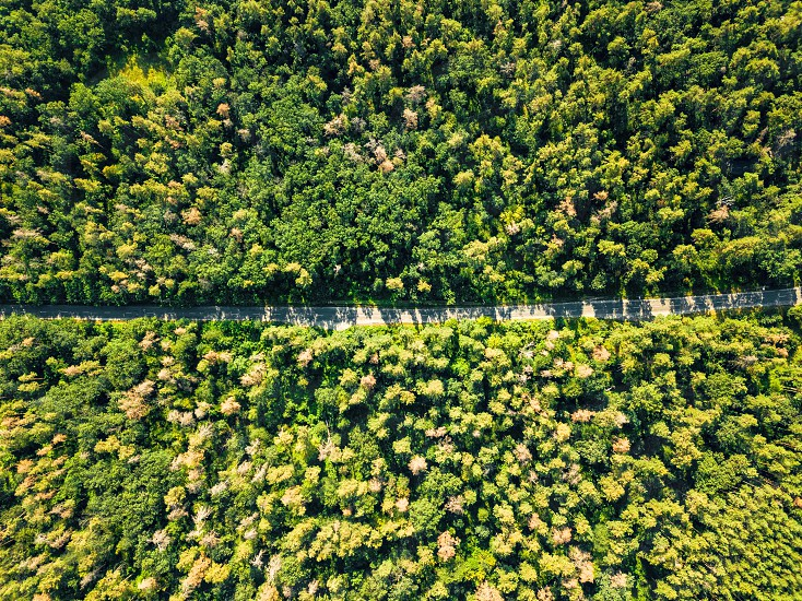 Aerial view of the road through the deciduous forest is a fine summer day. Nature conservation concept. photo