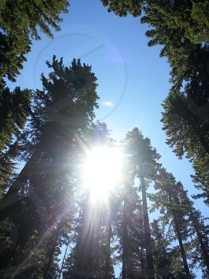 the treetops photo