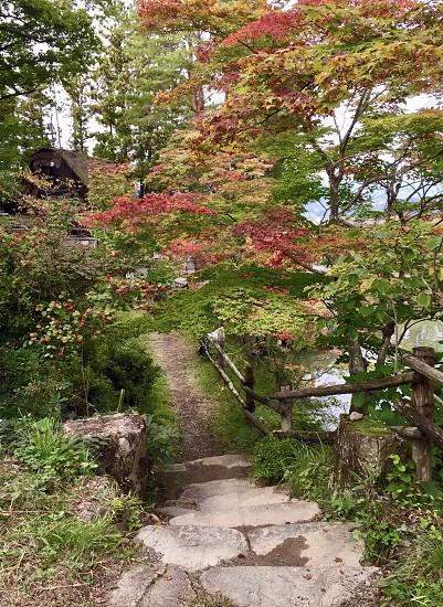 autumn fall trees leaves colours pathway seasons photo