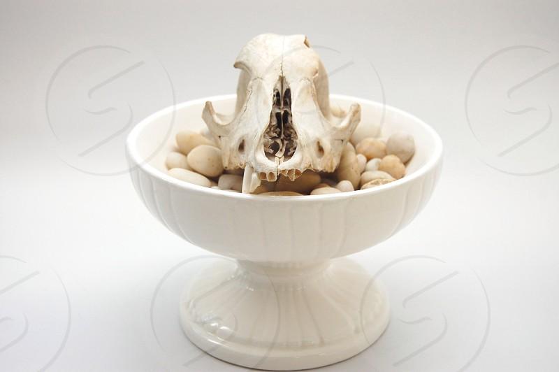 animal skull in bowl of rocks photo