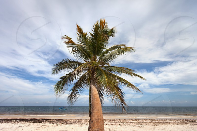 Cancun coast caribbean lifestyle images photo