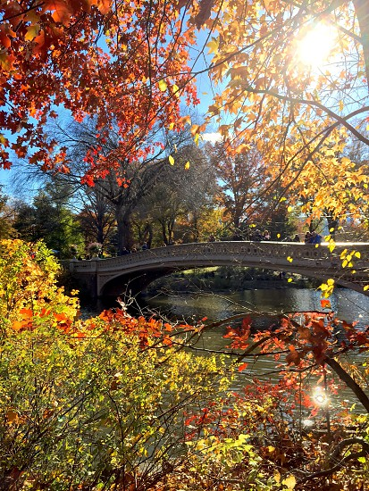 Beautiful fall day in Central Park  photo