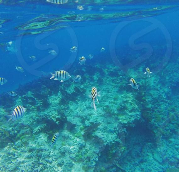 Fish underwater coast of key west snorkeling  photo