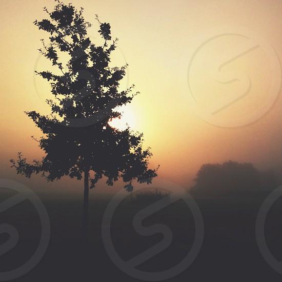foggy sunrise behind a tree photo