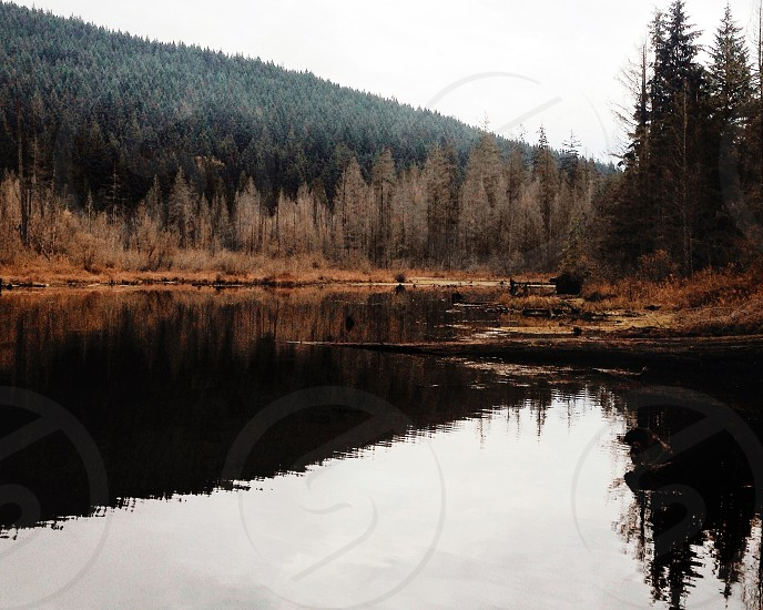 lake next to green pine trees photo