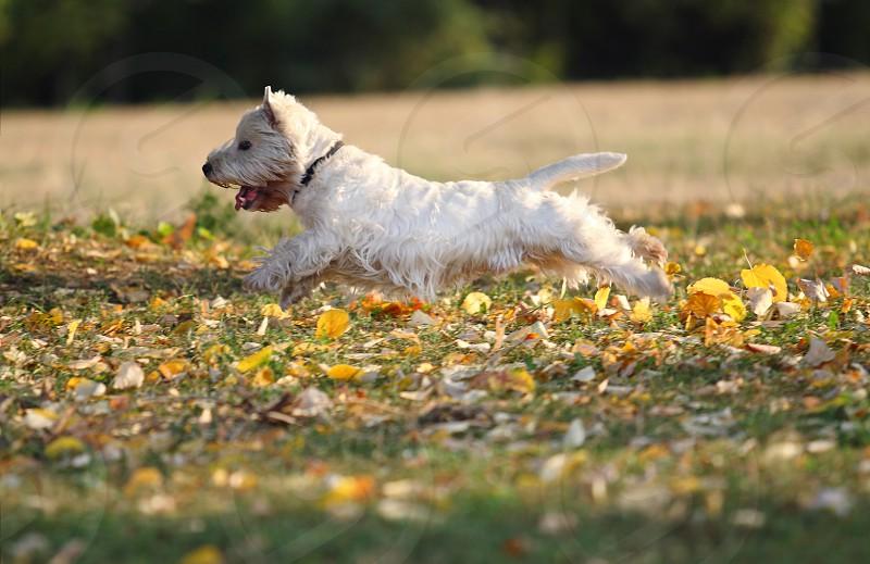 Dog running photo