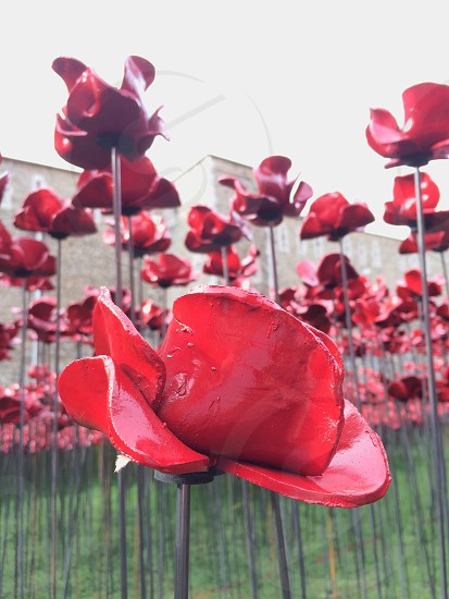 Poppy Tower of London photo